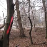 Grafitti i skoven