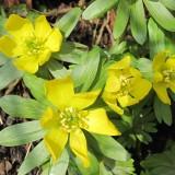 Jubiii, blomster i jordbunden