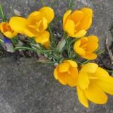 Ægte forår