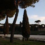 Smukke cypresser