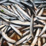 Lidt større sølvfisk end dem jeg har på badeværelset,  Foto: Charli