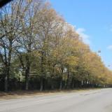 Kastanje træerne kaster af sig   Foto: Charli