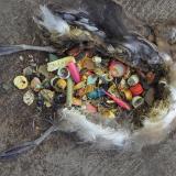 Ikke sjovt at opleve en fugl gå i plastik opløsning;-(
