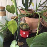 Sød lille kaktus som lå uskadt i containeren